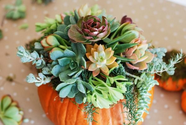 This DIY pumpkin succulent holder is the perfect way to ease into the fall season.