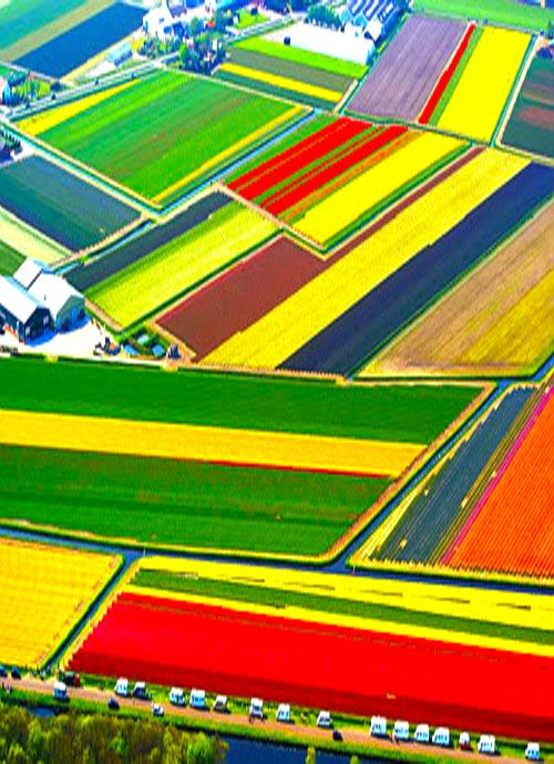 Look at all these colors! It's like you opened a brand new box of 64.  - Tulip Fields, Lisse, The Netherlands