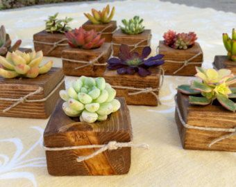 Simply rustic, natural beauty in this small Wood planter with a colorful living succulent. A very unique gift/favor for your guests to truly enjoy!! Succulent Wooden Planter Favors for your Wedding, Bridal Shower, Baby shower, Special event, Tea Party and more. $3.00 each.  Hand crafted, Small wooden planter measures 2.5 square and 1.5 tall. Although similar, being natural wood, each planter is unique. A natural twine rope with knot finishes this great look.  Succulent Cuttings are very ...