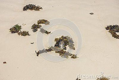 Alagae on the beach in Zanzibar in Kiwengwa village , Tanzania. Africa.  Background and texture.