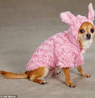 moldes de ropa para perros - Поиск в Google
