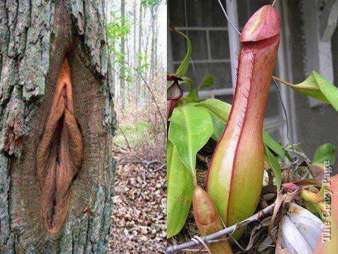 Porno Plants