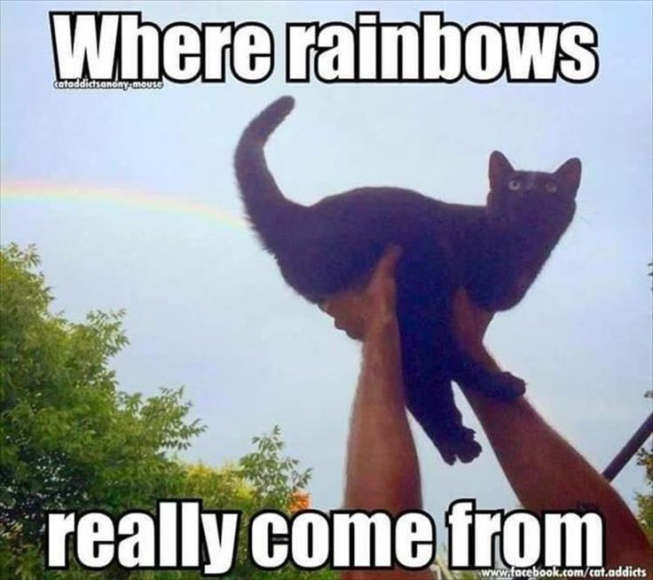 To some devoted cat owners - the sun shines out of here too ✅