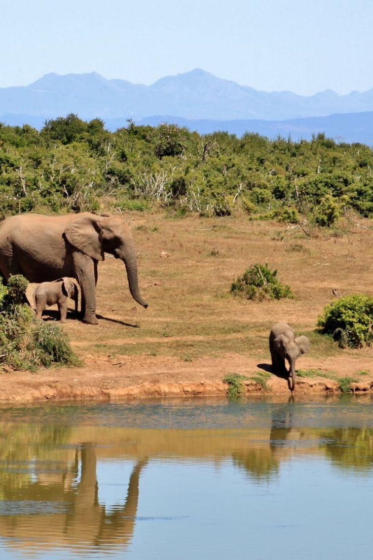 africa elephant river landscape safari