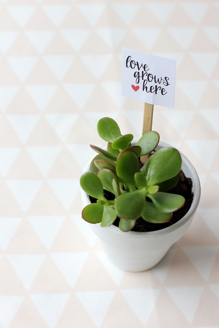 Make this sweet and simple living Valentine's favor with free printable, Love Grows Here.