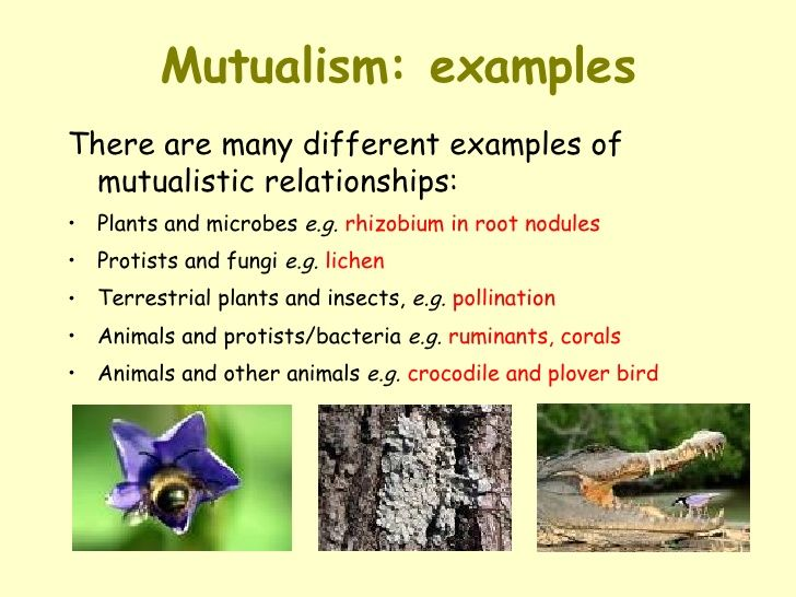 image result for examples mutualism