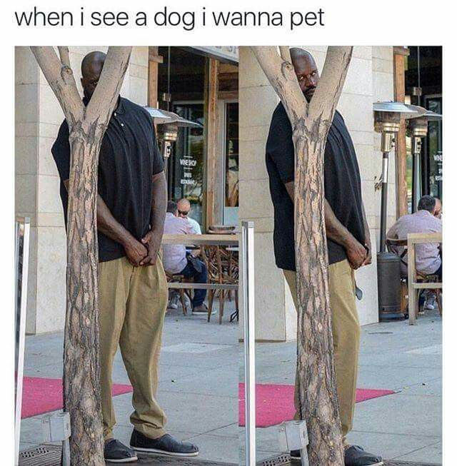 Shaq. Funny. Me when I see a dog I wanna pet