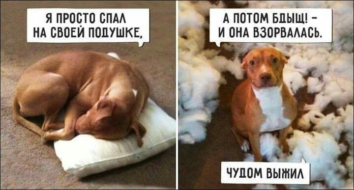 Картинка с собакой подушка взорвалась