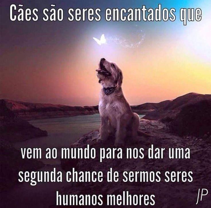 CONCORDO! ❤❤ #maedecachorro #paidecachorro #cachorroetudodebom #petmeupet #cachorro #gato #amoanimais
