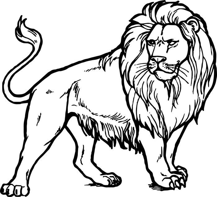 Lion Coloring Pages In 2020 Zoo Coloring Pages Animal Coloring