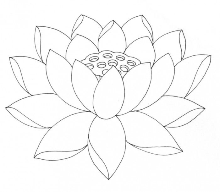 A lotus flower. (Lotus flowers have long thin petals, rise ...