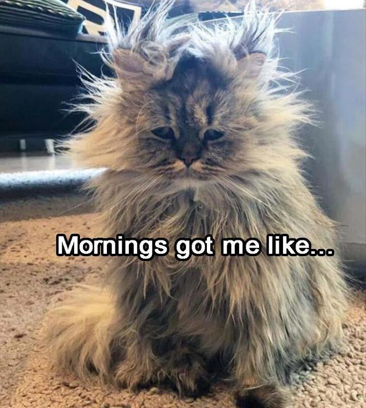 Mornings Got Me Like