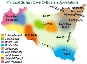 Principal olive cultivars by regional appellation.