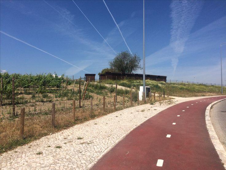 Ciclovia do Parque da Vinha de Lisboa