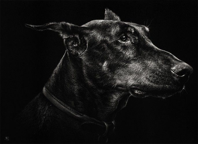 Best White On Black Images On Pinterest Black Paper Pencil - Breathtaking black and white animal portraits by lukas holas