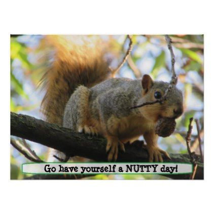 Have a Nutty Day Cute Squirrel Humor Poster - photography gifts diy custom unique special