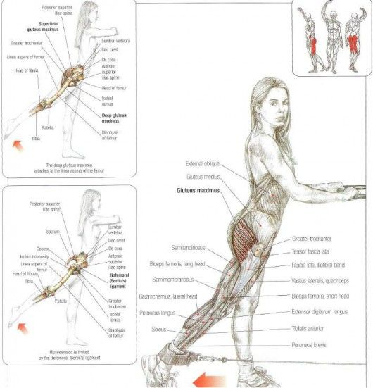 Exercise IV: Muscle activation during bridging cable glute kickbacks: glutes & hamstrings