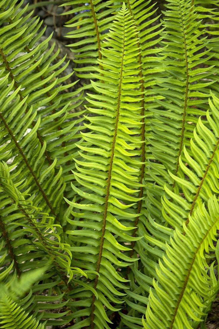 M s de 1000 ideas sobre full shade plants en pinterest - Plantas de sombra ...