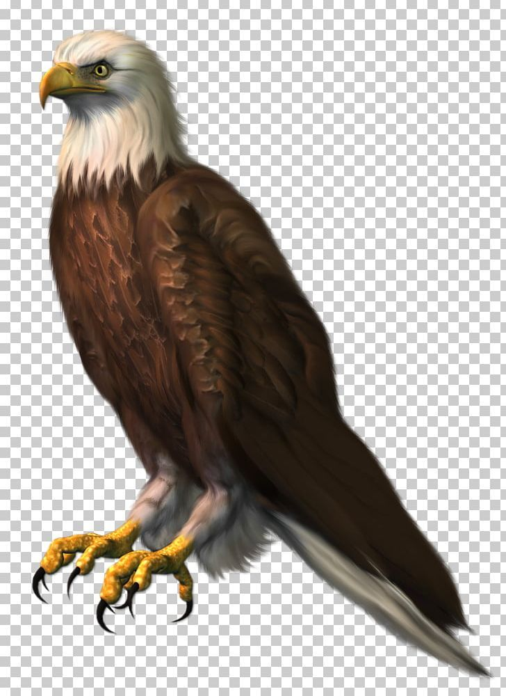 Bald Eagle Png Accipitridae Accipitriformes Bald Eagle Beak Bird Bald Eagle Blur Background In Photoshop Photo Background Images Hd