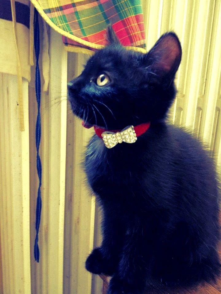les 25 meilleures id es de la cat gorie donne chaton sur pinterest chat noir noir lucas et. Black Bedroom Furniture Sets. Home Design Ideas