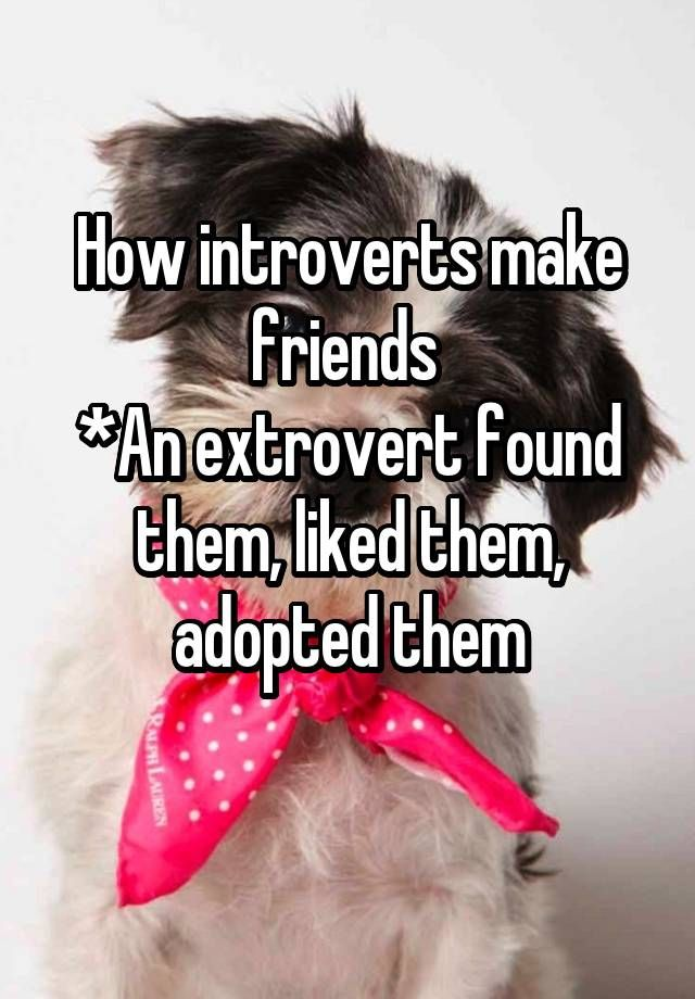 How introverts make friends *An extrovert found them, liked them, adopted them