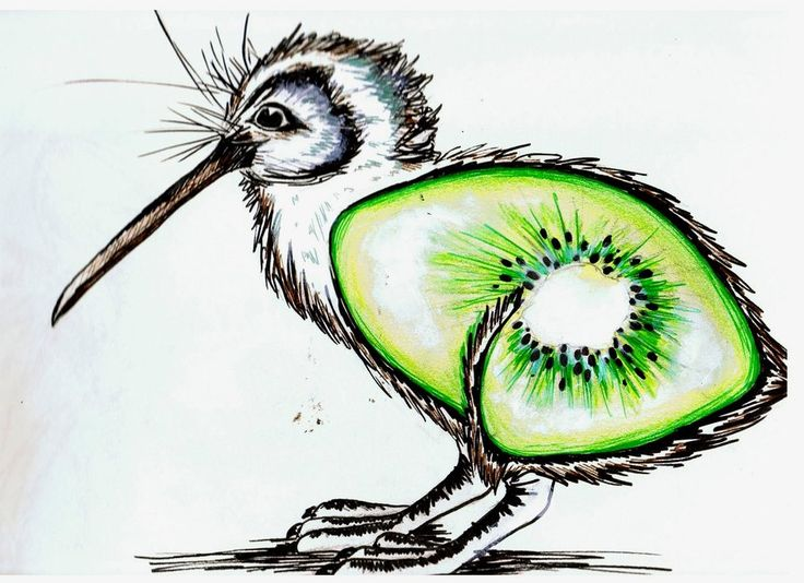 The kiwi fruit bird by ~keidapirate on deviantART