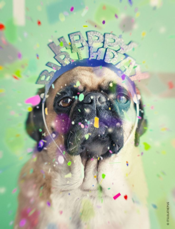 It's time to celebrate - it's my 5th birthday today, yippee ✨
