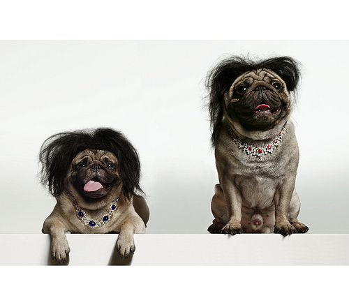 pugs with wigs--  That's almost scary. lol  but the necklaces balance things out.