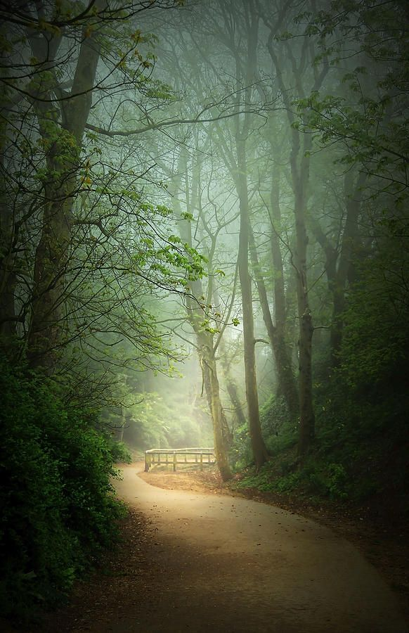 Along the Path Photograph by Svetlana Sewell - Along the Path Fine Art Prints and Posters for Sale