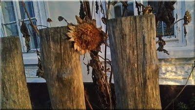 akácfa kerítés, antik fakerítés