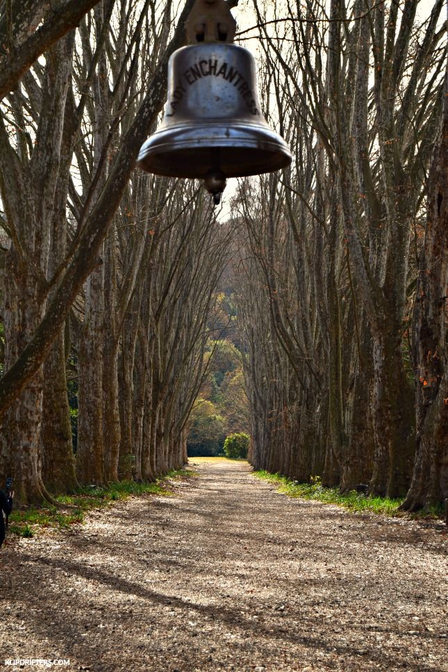 KwaZulu-Natal Botanical Gardens, Pietermaritzburg, Enchanted bell , plane tree avenue, South Africa