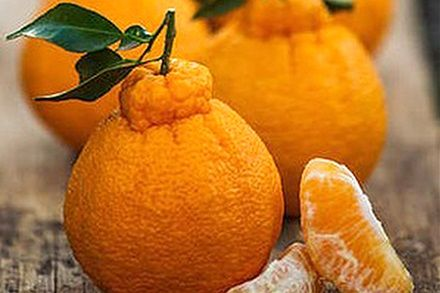 Sumo Tangerine and Kiwi Salsa – The Daily Basics