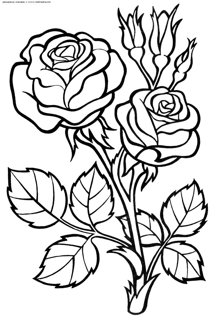6528.gif (1000×1445) Flower coloring pages, Beautiful