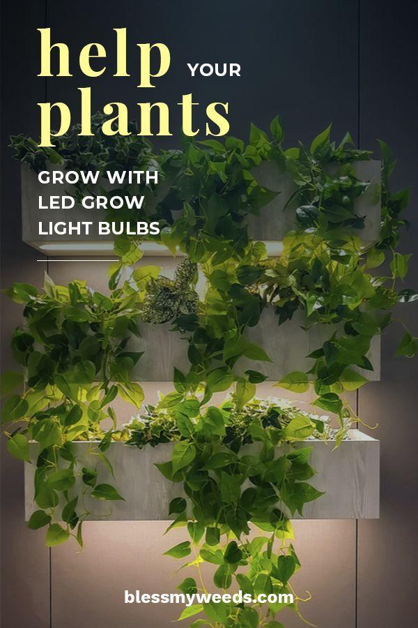 Help Your Plants Grow With Led Grow Light Bulbs Grow Lights For Plants Plants Led Grow Light Bulbs