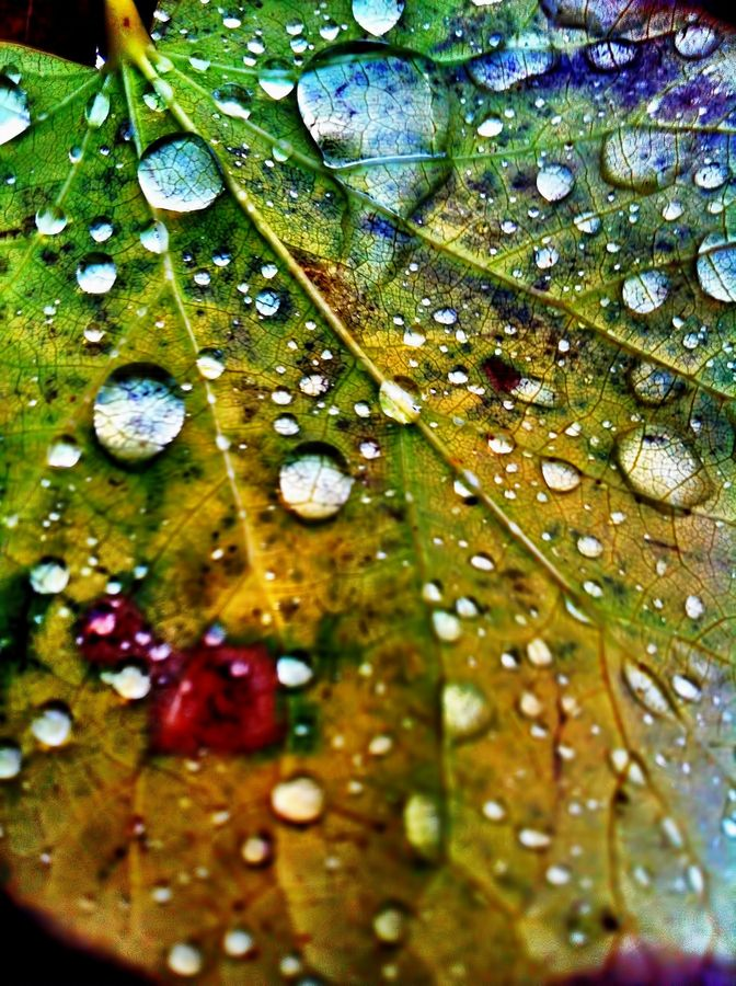 ~~Momentary beauty ~ raindrops on autumn leaf macro by Alex Greenshpun~~
