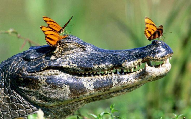 Natureza selvagem em fotografias 19