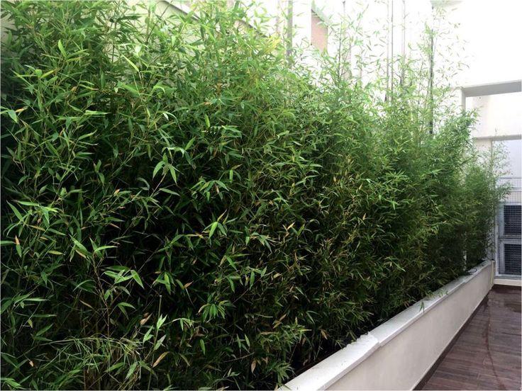 Terraza realizada por Jardines y Rincones Paisajismo