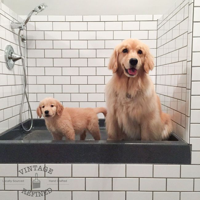 But what were we to do i wasnt about to keep lucy indoors all day diy dog shower bathroom ideas foyer pets animals solutioingenieria Image collections