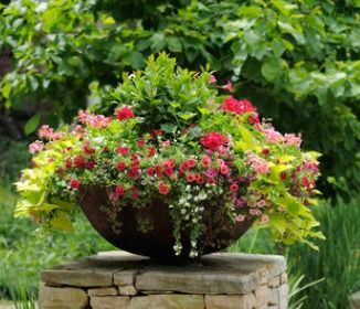 246 Best Outdoors   Potted Plants/Flowers Images On Pinterest | Gardening,  Balcony And Garden Planters