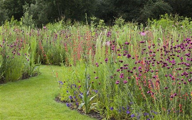 Tom Stuart-Smith's meadow in bloom. Plants growing in the grounds include Dianthus carthusianorum, Echinacea paradoxa, Penstemon cobaea and Penstemon barbatus subsp. coccineus.