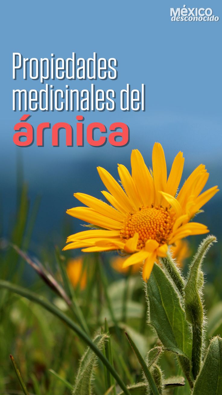 Fields, Cricut, Nature, Plants, Gardening, Herbal Medicine, Gardens, Seeds, Health Recipes