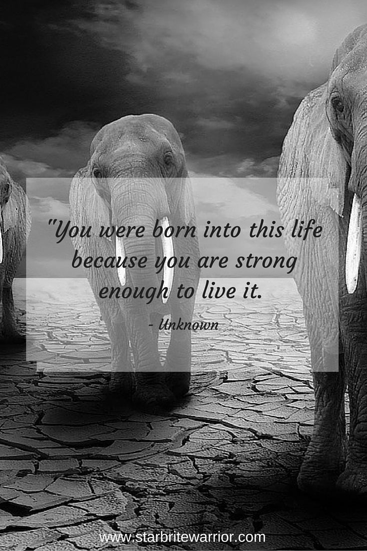Best 20+ Elephant Quotes ideas on Pinterest | Hinduism ... - photo#39