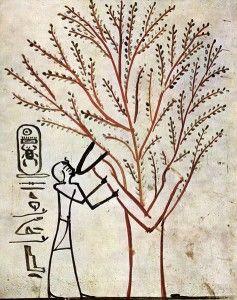 La diosa Isis en forma de árbol sagrado de Sicomoro amamantando al rey Tutmosis III Tumba del rey KV34. Foto: Wikipedia