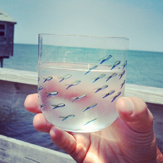 Fish glasses.Gift, Skirts, Decor Inspiration, Glasses Inspiration, Beach, Products Design, Blog, Fish Glasses Cut, The Holiday