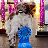#dogalize Peanut Dog – The World's Ugliest dog in 2014 #dogs #cats #pets
