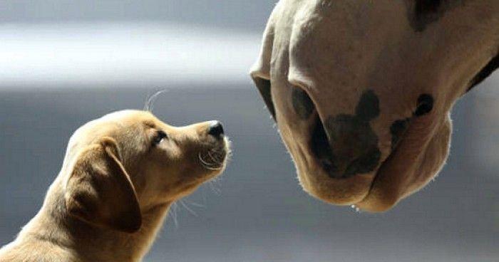 Όταν ένας σκύλος αγαπάει ένα άλογο