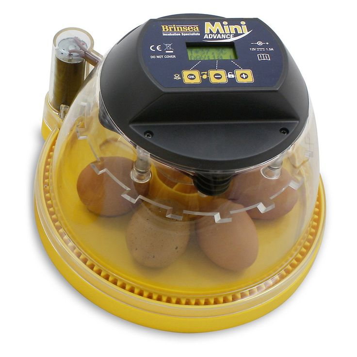 Mini Advance Automatic Egg Incubator | from hayneedle.com