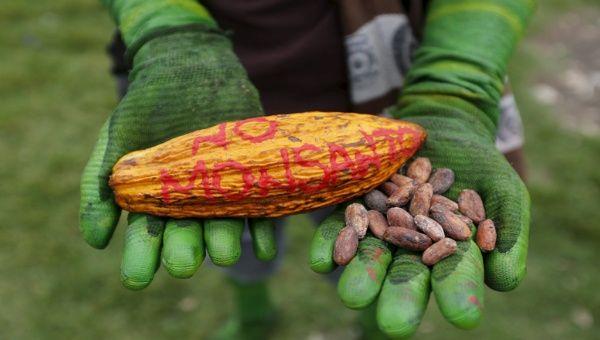 El sistema que permite a Monsanto imponer su ley está basado en colusión entre  la industria agroquímica y el Estado. | Foto: Reuters