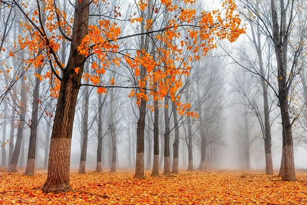 Best Landscape Photographers