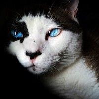 #dogalize Enfermedades Felinas: Rinotraqueitis felina sintomas #dogs #cats #pets